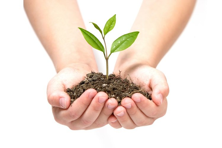 waste clearance and planting trees
