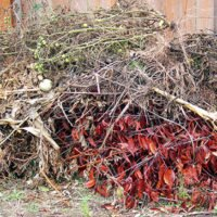 What Comes Next After You Dispose of Garden Waste?